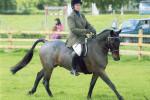 Profile equestrian exp 2