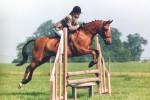 profile equestrian exp 1