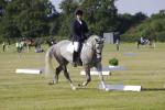 profile equestrian exp 4